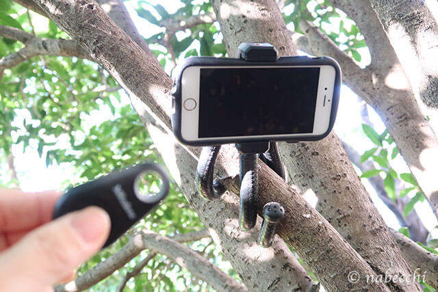 枝にミニ三脚巻き付け固定 リモコン撮影