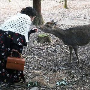 奈良春日大社の初詣。ホッコリあったかウールアンサンブルでGO