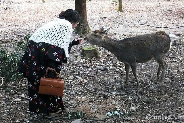 ウール着物に奈良の鹿