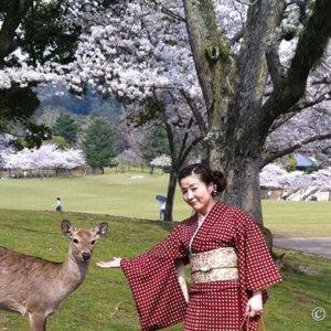 奈良公園で着物友達とお花見。水玉柄お召着物にドヤ顔の鹿