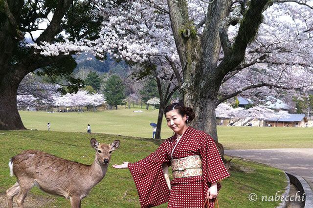 奈良公園で鹿とお召着物
