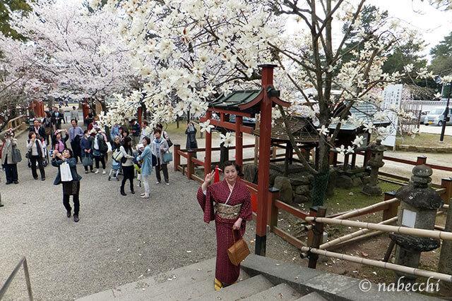 氷室神社でしだれ桜とハクモクレン