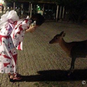 噛みつかないで!奈良の燈花会で鹿に追いかけられる浴衣アラフォー女