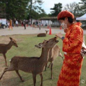 奈良公園で鹿の餌やりは怖いゾ。オレンジしすぎウール矢絣着物コーデ