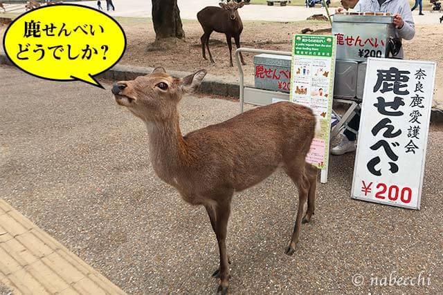 奈良公園の鹿せんべい販売