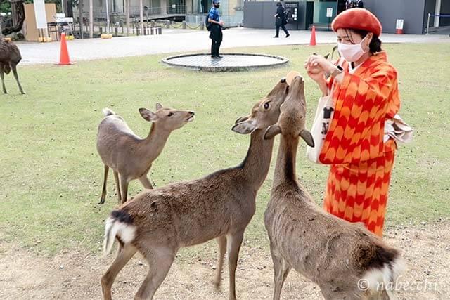 奈良公園で鹿の餌やり