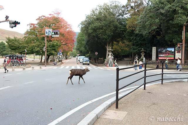 交差点を渡る鹿