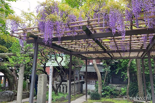 住吉神社(東京)の藤棚