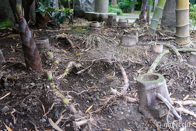 竹をカットした跡地