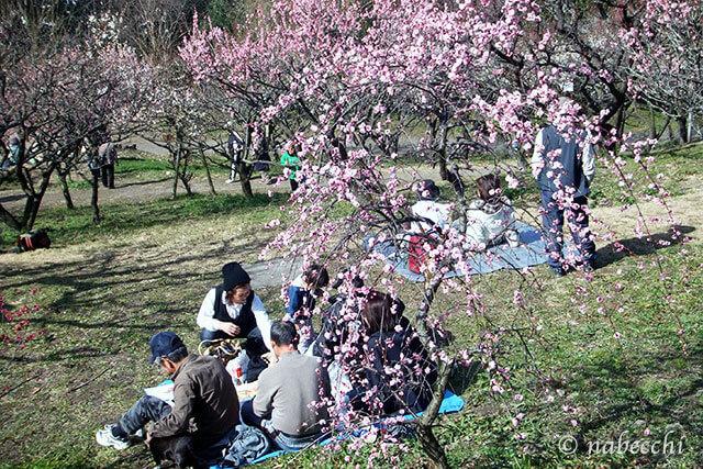 梅花見 平岡公園