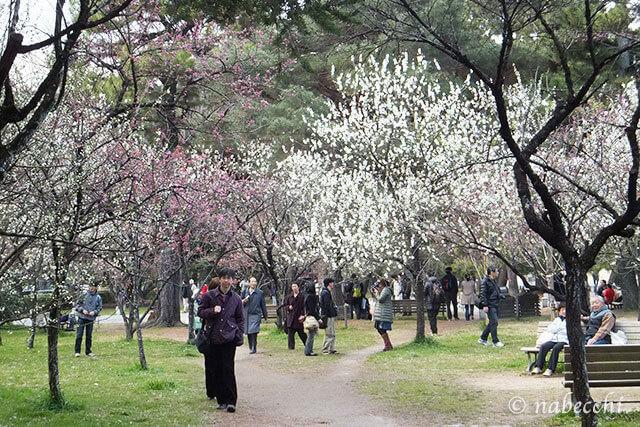4月の梅林 京都御苑