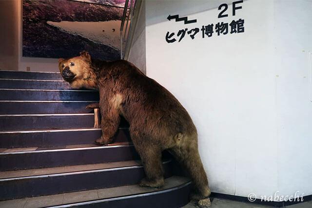 ヒグマ博物館 のぼりべつクマ牧場