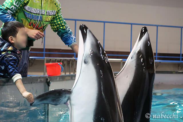 イルカと触れ合い体験 登別マリンパークニクス