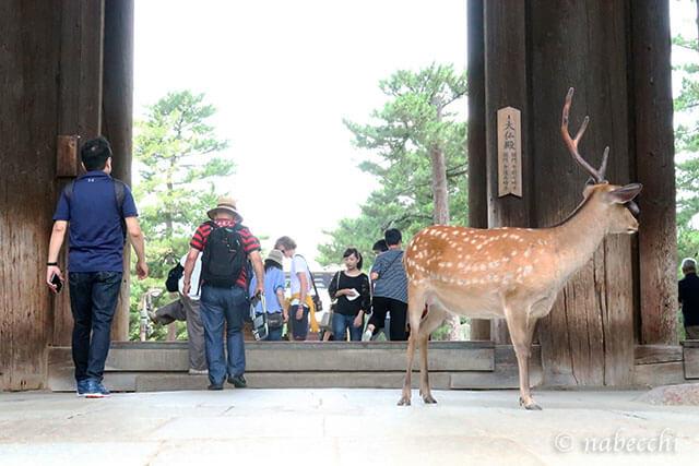 店の前を占拠する奈良の鹿
