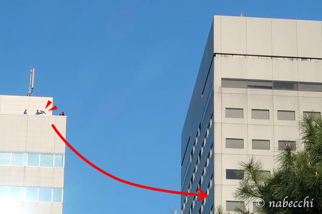 浜離宮三井ビルディングの屋上からタカが飛翔