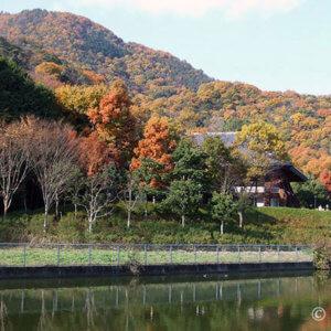 奈良二上山は色鮮やかで紅葉の秋!カンカンと音にびっくりハイキング