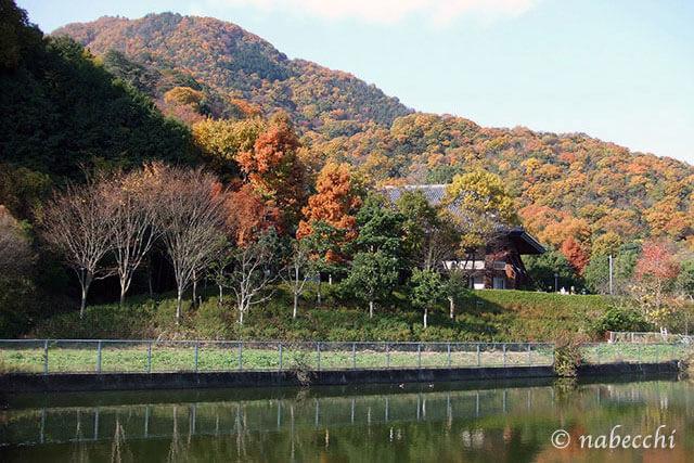11月の紅葉奈良二上山