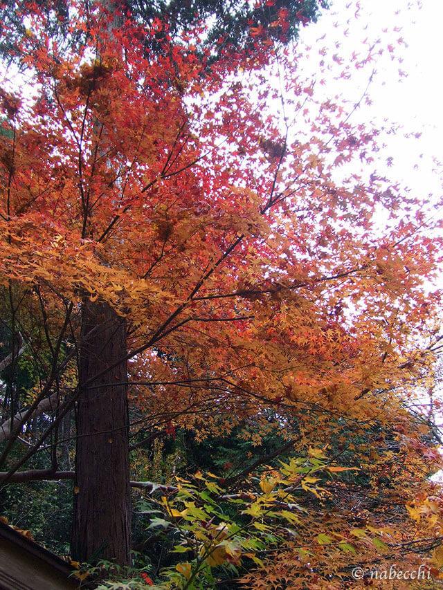 二上山 色づく紅葉