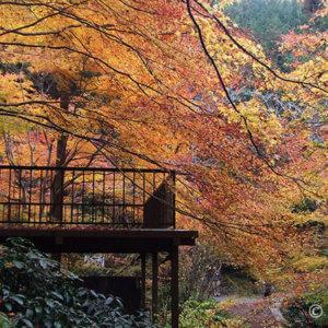 奈良で色鮮やかな紅葉は断然二上山。電車だけでも行けるハイキング