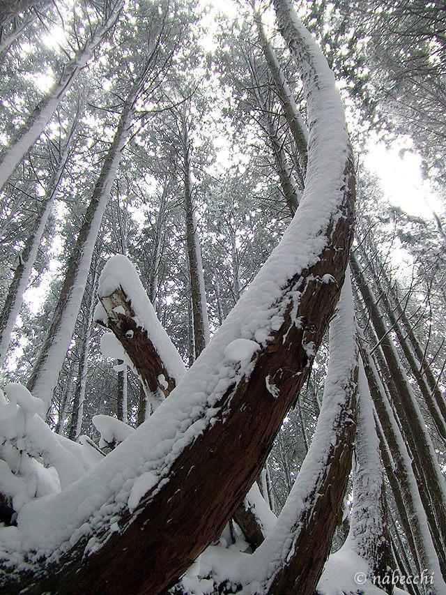 雪積もる木々