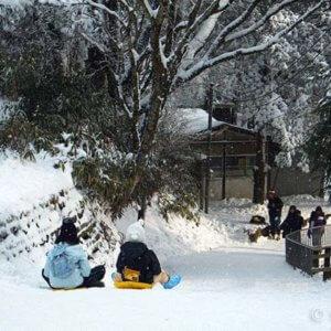 冬の金剛山はソリでGO!雪で最高の遊び場