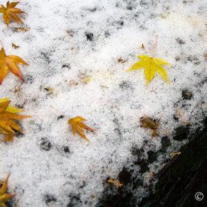 紅葉穴場スポット二上山、12月初旬は雪とMIX