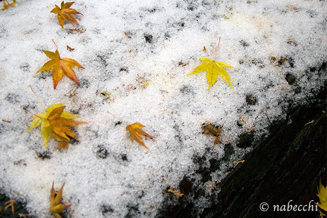 雪に紅葉 二上山