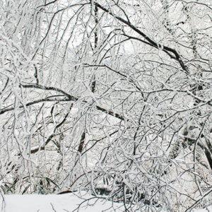 大阪金剛山にドカ雪!雪中登山、週末限定金剛バスで水越峠へアクセス