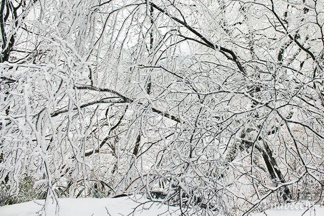 樹氷 金剛山