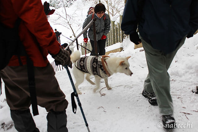 雪の金剛山 犬