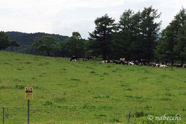 北海道の牧場