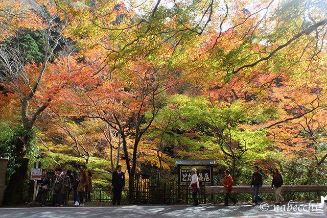 紅葉した京都「栂ノ尾」バス停前
