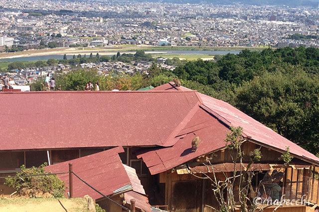 屋根を走り回る猿 嵐山モンキーパーク