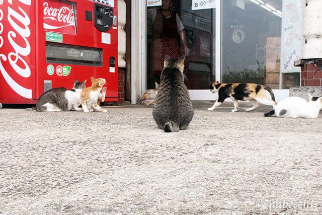 池島 食堂「かあちゃんの店」前にたむろう猫