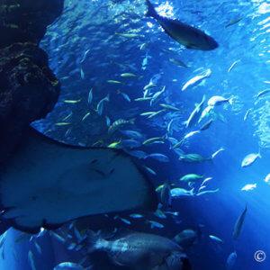 暑い夏に京都水族館をオススメする3つの理由。家族でも恋人でも楽し