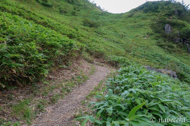 焼岳登山 生い茂る笹道