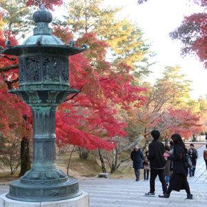 紅葉見頃 秋の京都はレンタサイクル♪京都駅→北野天満宮→二条城