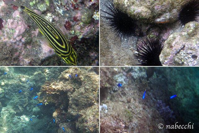 南伊豆・子浦シュノーケリングで出会った魚・海の生き物たち