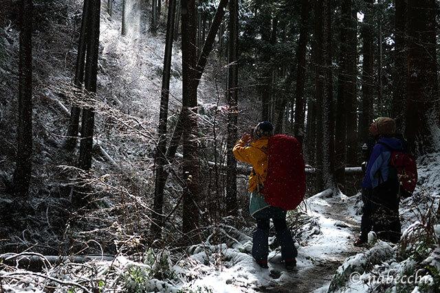 キラキラ雪が舞い散る木漏れ日の金剛山